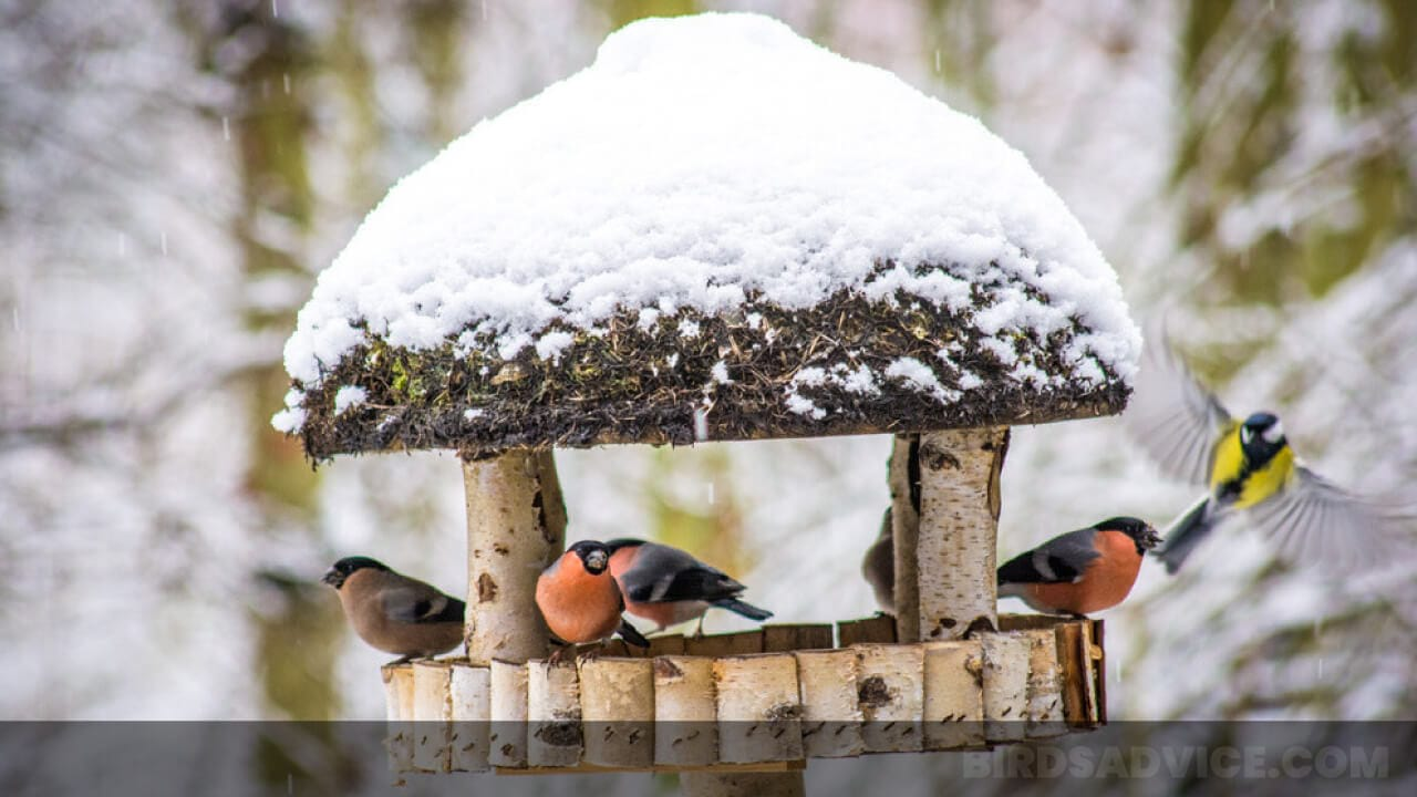 Do Birds Use Birdhouses in Winter