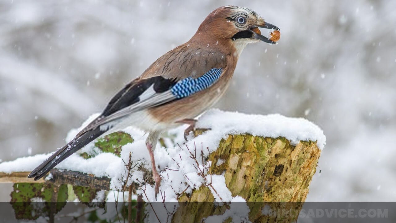 What Do Birds Eat in the Winter