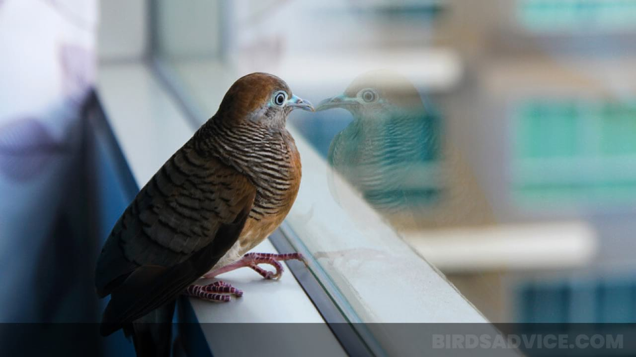 How To Stop Birds From Flying Into Windows